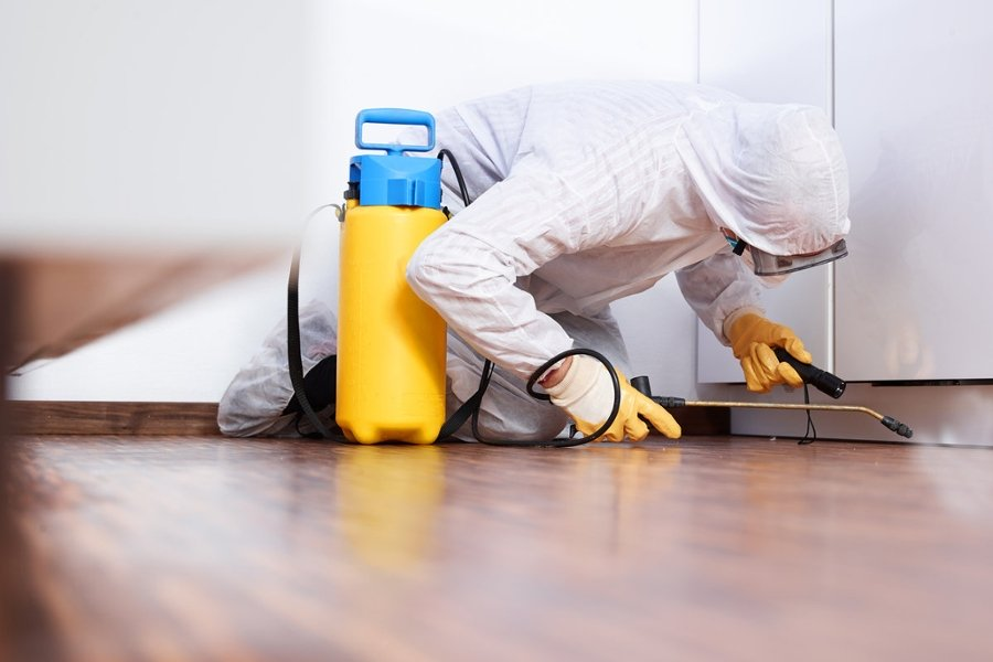Herbal pest control services Pune